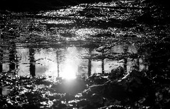a Spring tune (VelannaRay) Tags: shine sunshine spring bw black film filmphoto forest water mood monochrome magic outdoor пленка природа чб чернобелое чудо вечер свет
