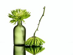 Green (Karen_Chappell) Tags: green white glass bottle vase mum floral stilllife two 2 upsidedown chrysanthemum