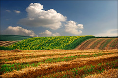 Silence of nature (Katarina 2353) Tags: vojvodina serbia katarina2353 katarinastefanovic