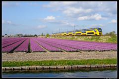 NSR-9574+9516_Hil_18042017 (Dennis Koster) Tags: nsr ns personentrein passagierstrein hillegom bollen