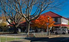 A Blaze of Colour (Jocey K) Tags: newzealand southisland canterbury akaora bankspeninsula autumn trees colour cars road street buildings sky architecture sign fence lamp shadows