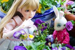 Should she? (assamcat) Tags: catriona chloe dollmore msd bjd rabbit resin easter abjd canon macro flowers spring pipos