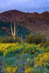 20170320-DSC_4957-Edit (lilnjn) Tags: arizona landscape southwestunitedstates travel unitedstates sky sunrise whitetank