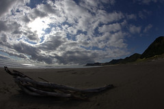 Yet another dead-wood-on-a-beach picture