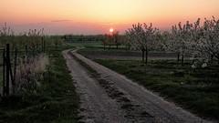 Orchard road Sunrise (Parchman Kid (Jerry)) Tags: orchard road sunrise parchmankid sony a6000 fence line hff rheinlandpfalz