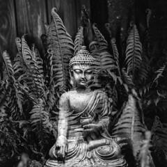 Let me never imagine I am something. (brenkee) Tags: buddha buddhist mooji film hasselblad yongnuo planar carlzeiss doubleexposure multiple ledlights ilford hp5 lc29 analog filmisnotdead buyfilmnotmegapixels
