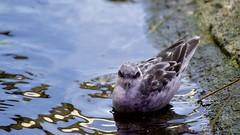 Monterey Bay Aquarium (grendel7469) Tags: mba monterey ca centralcoast montereybayaquarium octopus cuttlefish seabirds flowers seahorse sea ocean seaanimals animals wildlife