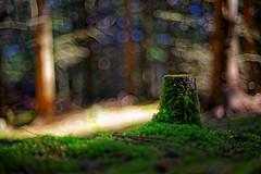 #64 - In the forest on the moss / V lese na mechu (photo.by.DK) Tags: forest moss intheforest onthemoss autorevuenon autorevuenon5014 bokeh legacylens oldlens artbydk photobydk