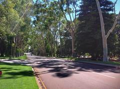 Fraser Avenue Kings Park Perth (sander_sloots) Tags: fraser avenue perth kings park trees gumtree gumtrees gombomen eucalyptus