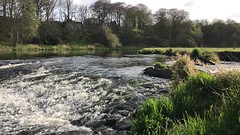 River Don Imitating Niagara Falls Aberdeen Scotland 30/4/17 (Dano-Photography) Tags: flickrexplore saveearth relaxing calm cameraphone landscape scenery niagarafalls iphone7plus iphone recent ancient trees forest woods bridgeofdon tillydrone donside serene tranquil praceful rough waves fastflowing countrysidewalk countryside naturewalks nature ozone preservation conservation 2017 dano bluesky clouds estuary pool lake river video hd 4k aberdeen riverdon naturereserve countrypark danrstone waterfalls