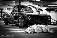 laziest photobomb ever (Chris B 1000D) Tags: road chris shadow dog pet black reflection lines canon photography lights golden poser shiny mine angle fife dundee south awesome parking low group wide perspective scottish scene tesco retriever chillin strip mean pup audi meet tayside monthly ziggy caddy vag dubs mk1 svag berridge dubdog