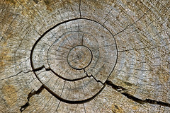 circles on bark of a tree cutted (Mimadeo) Tags: life wood old brown abstract tree texture nature closeup forest circle wooden saw log pattern cross natural cut timber background surface ring bark slice trunk weathered material treebark organic shape aging plank section cracked cortex concentric striped lumber textured