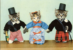 Dress to impress (the ghost of me) Tags: cats cat vintage postcard kittens dressed