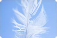Feather... (Dra B.) Tags: blue summer sky white bird plane nice pretty wind small feather calm blow dorabirgis