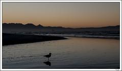 Pink Dawn (Yvonne V) Tags: ocean sea seascape beach birds silhouette sunrise landscape dawn nikon seagull d300 18200mm hillcrestcameraclub muizenburgcapetown