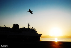 Flying to the sunrise! (Nikos Voustros) Tags: bird port sunrise ship hellas greece rafina ελλάδα πουλί λιμάνι πλοίο ξημέρωμα ελλάσ ραφήνα