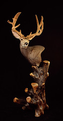 "Velvet Mule Deer • <a style=""font-size:0.8em;"" href=""http://www.flickr.com/photos/27376150@N03/9350757739/"" target=""_blank"">View on Flickr</a>"