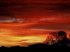 Red sky at Night (macadee) Tags: red sky night sunset willow tree salix babylonica babylon weeping alabamavets blenheim marlborough newzealand alabama vets flickr macadee vet
