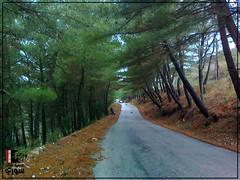 -     | Jableh - Bani Qahtan Castle Road (Young syrian's Lens -   ) Tags: nature forest syria siria  lattakia latakia jableh