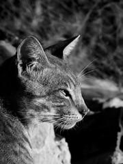 cat. (kassiamelo) Tags: light blackandwhite bw nature cat photography photo shadows bokeh natureza gato fotografia effect pretoebrancopb