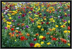 Toowoomba Flowers-005=