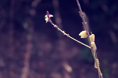 Untitled (Tiago Fbrica) Tags: life flowers wild camp flower green nature beautiful yellow canon photography photo amazing