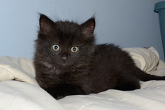 Black ([jonrev]) Tags: saved wild pet cats baby animal cat living kittens front neighborhood domestic porch shelter adopted rescued feral