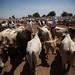 Animal trading in Forobaranga