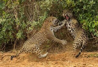 【组图】2013年度野生动物摄影大赛获奖作品集