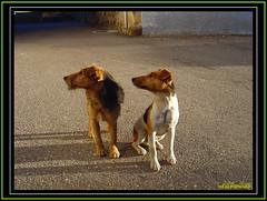 CanCn (Alfer520) Tags: rural pareja pueblo perros animales casas miradas castillayleon todoslosderechosreservados alfer520