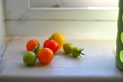last of the tomatoes (UncommonGrace) Tags: