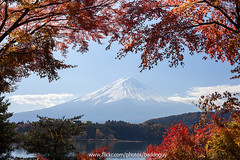 Mt Fuji and Maple Corridor (baddoguy) Tags: travel autumn lake nature japan horizontal volcano maple corridor tranquility nopeople landmark images fallfoliage getty destination fujisan naturalwonder iconic mtfuji yamanashi kawaguchiko coneshape traveldestination
