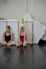 IMG_8329 (nda_photographer) Tags: boy ballet girl dance concert babies contemporary character jazz newcastledanceacademy