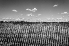 (Kathleen Nicole) Tags: new york blackandwhite white ny newyork black color 20d film pen canon fence island photography li pig long sheep kathleen canon20d goat longisland pigs lamb noise far gain filmlike legakis kathleenlegakis kathleenlegakisphotography