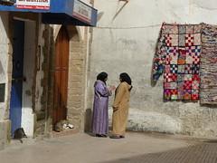 Cats of Essaouira (karina robin travel photography) Tags: voyage travel cats robin cat reisen chat northafrica morocco maroc katze essaouira marokko karina nordafrika