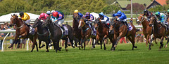 Ellerslie (Peter Jennings 15 Million+ views) Tags: new horses home stand is day hats ascot racing peter auckland zealand nz fancy boxing past betting viva racecourse thunder jennings fashions ellerslie
