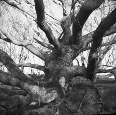 Tree by folder