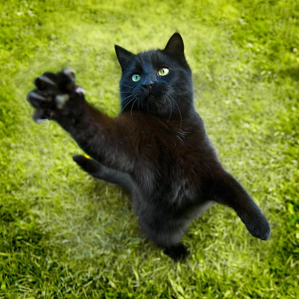 Cat Secret Life Of Pets
