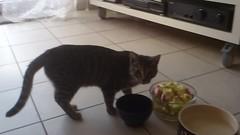 MOV_0429 (frankbehrens) Tags: cats tom cat chats chat gatos gato katze katzen kater