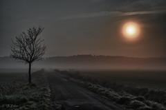 guten Morgen - HDR.jpg (neun10sechsund70) Tags: morning tree nebel good dust sonne morgen guten baum hdr morgenrot diesig