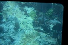 27. John Pennekamp glass bottom boat (Misty Garrick) Tags: johnpennekamp johnpennekampreef johnpennekampcoralreefstatepark coralreef florida keylargofl keylargo floridakeys atlanticocean