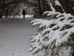 Winter walk (halifaxlight) Tags: canada novascotia indianpoint winter snow trees path orchard figure walking bokeh