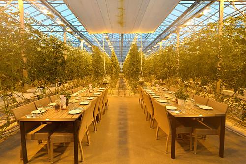 Iceland Tomato Greenhouse
