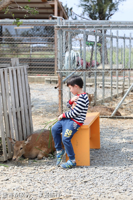 跟著 Mikey 一家去旅行 - 【 恆春 】鹿境梅花鹿生態園區 - 梅花鹿篇