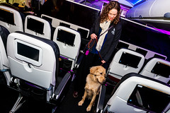 Guide Dogs for the Blind 1 (NickRoseSN) Tags: guidedogsfortheblind guidedogs dogs virginamerica alaskaairlines airline burlingame sanmateocounty sanmateo sanfrancisco sf sfo sfoairport sanfranciscoairport sanfranciscointernationalairport sfbayarea bayarea california ca