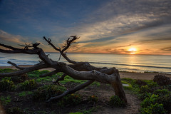 Weathered Sunset (CloudRipR) Tags: sunset trees ocean sky clouds beach sand waves nikon d810 greaterphotographers greatestphotographers ultimatephotographers superstarphotographer