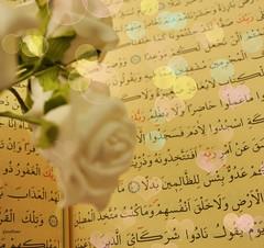 ♥ (gLySuNfLoWeR) Tags: ♥ kuran quran bokeh heart kalp islam islamiyet islamiat gül rose çiçek oku ikra read