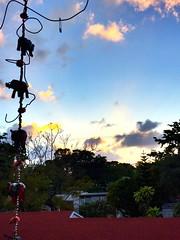 Sundown (santoscinderella) Tags: view orange yellow blue clouds sky happy relaxing florida miami palmtrees rays tropical trees elephants floors beauty sun sundown