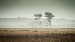 The Twin Cypresses of Ano Nuevo No.2 (CDay DaytimeStudios w/1,000,000 views) Tags: anonuevo anonuevostatepark beach ca california californiasateparks cloud clouds cloudy cloudyday coastline pacificcoast pacificcoasthighway road sanmateocoast trees