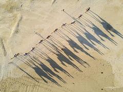 Camels (jsmDIGITAL) Tags: aerial uav drone dji mavic camels beach new australia